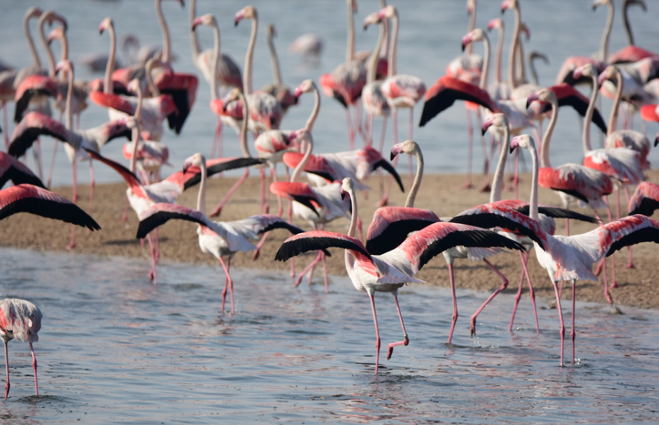 wetland reserve in dubai with flamingos