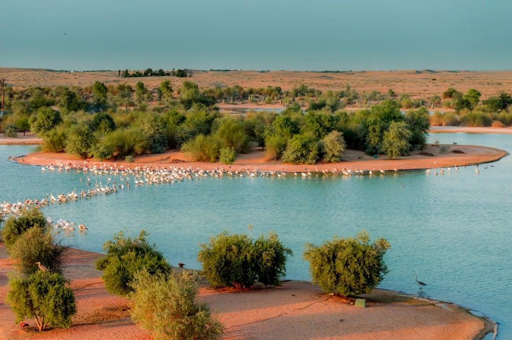 al qudra lake natural attractions in uae