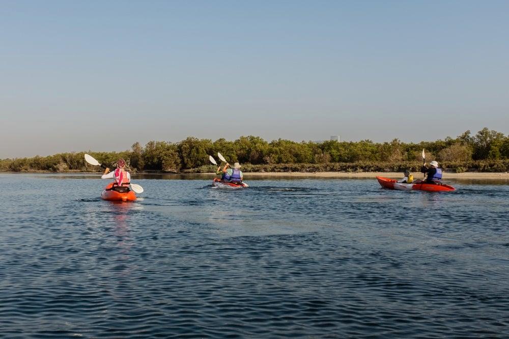 mangrove in UAE kayaking