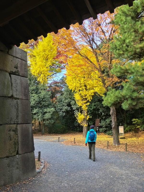 walking around the nijo castle in kyoto