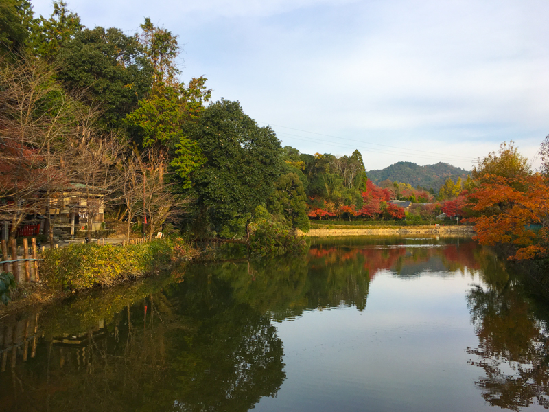 what to see in kyoto areas around the bamboo forest