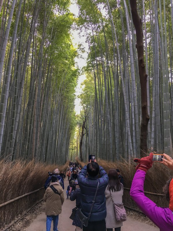 the bamboo forest in kyoto with lots of tourists