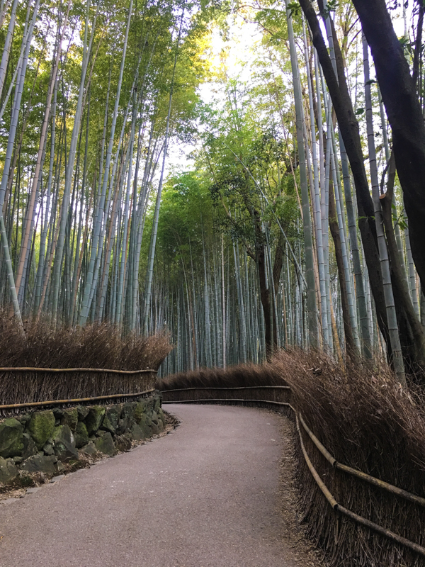 what to see in kyoto the popular bamboo forest