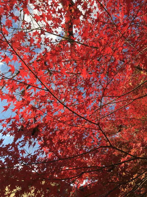what to see in kyoto the fall foliage and autumn colours