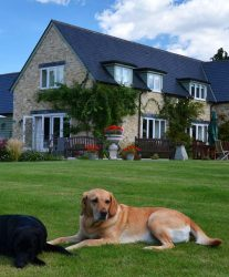 10 Reasons Why House Sitting is The Ultimate Job