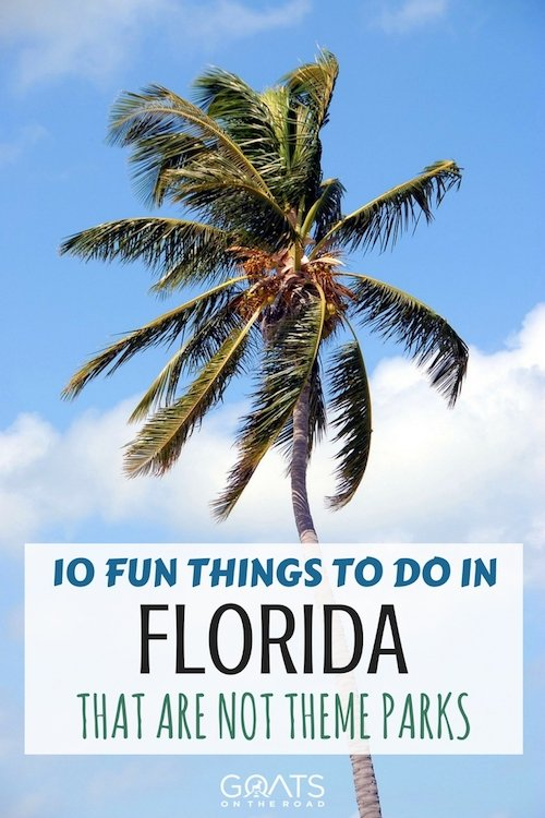 Palm tree and blue sky with text overlay 10 fun things to do in Florida