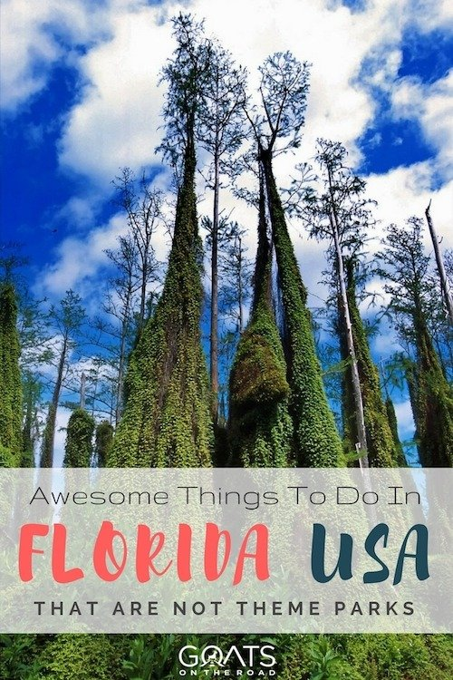 Tall tree ferns with text overlay awesome things to do in Florida USA that are not theme parks