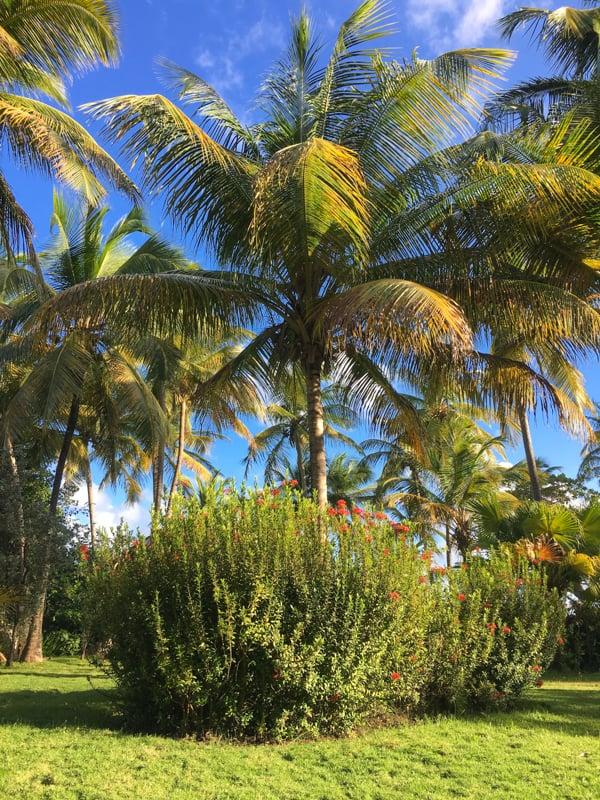living as digital nomads in grenada tropical trees