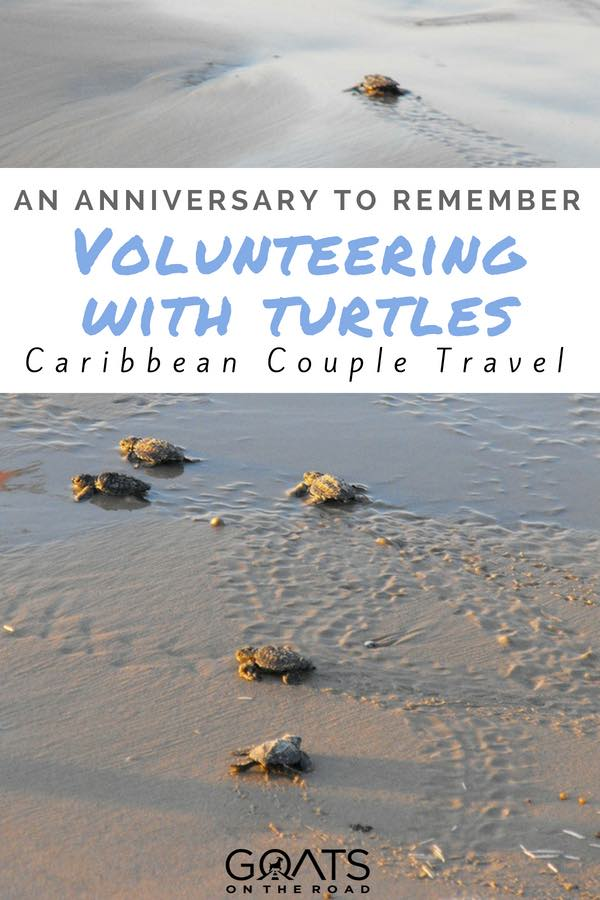 Baby turtles on beach with text overlay An Anniversary To Remember Volunteering With Turtles