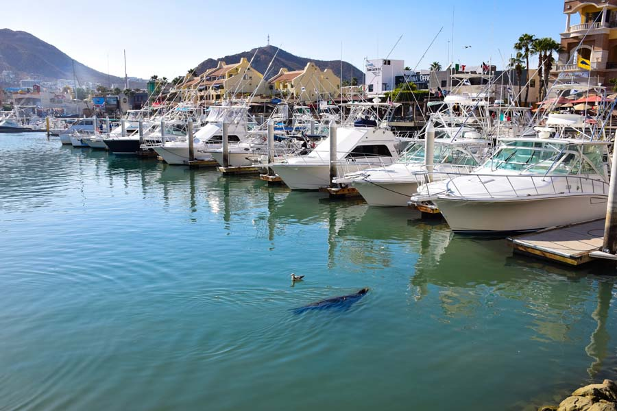 watching seals at the marina in cabo san lucas is a top thing to do