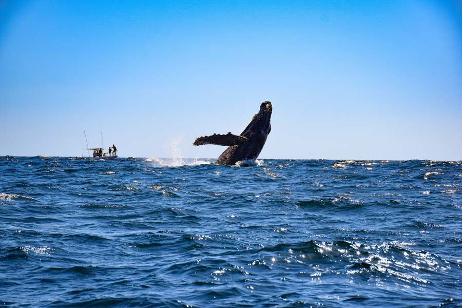 things to do in cabo san lucas whale watching