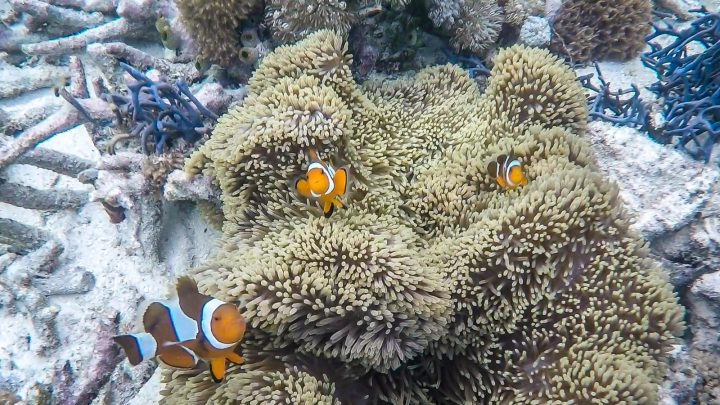 Underwater fish - things to do in Koh Lipe