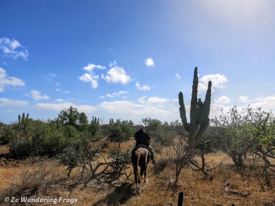Horseback Riding in the desert fun things to do in La Paz, Mexico