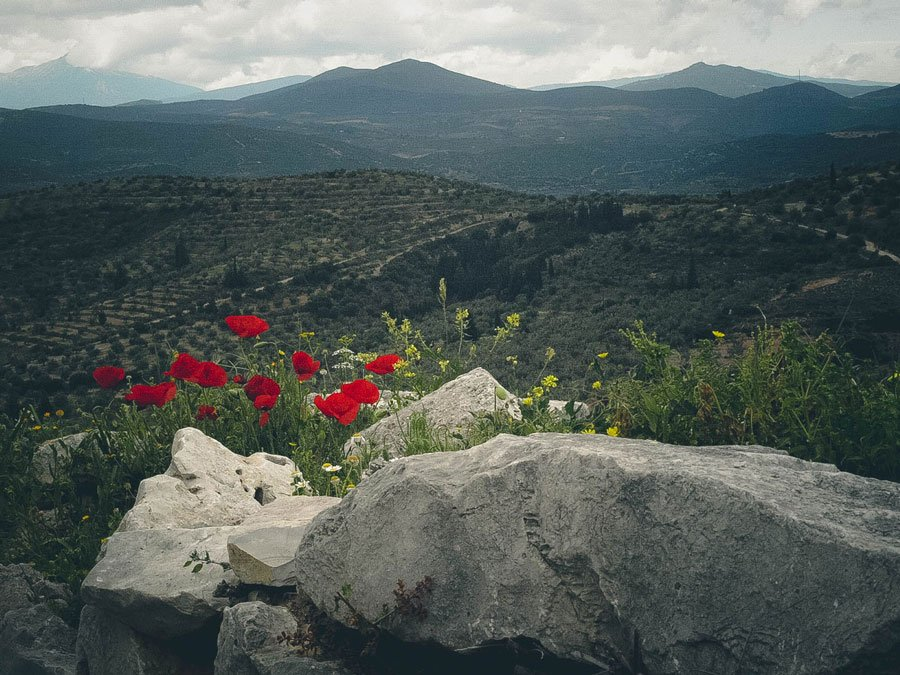 things to do in Greece - spring flowers