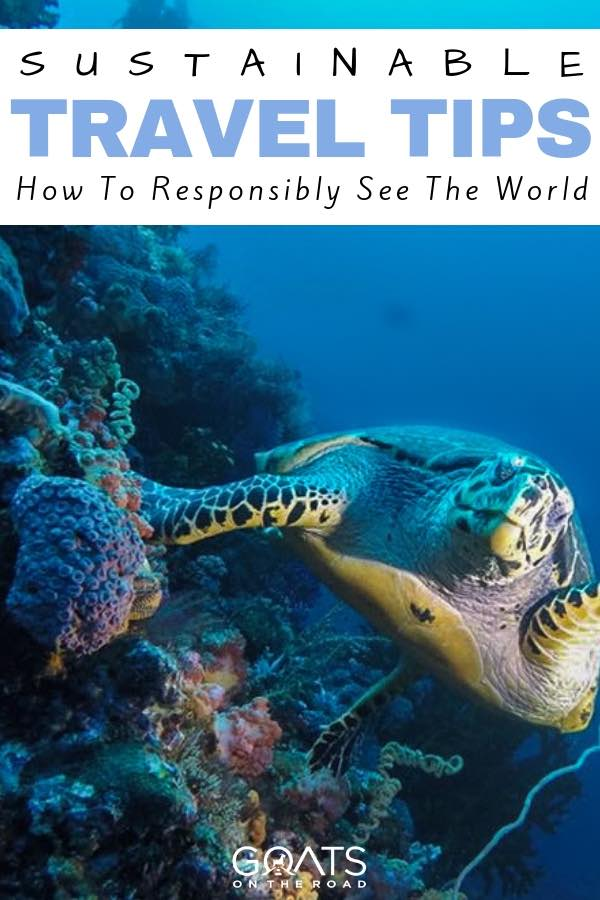 Sea turtle with text overlay Sustainable Travel Tips