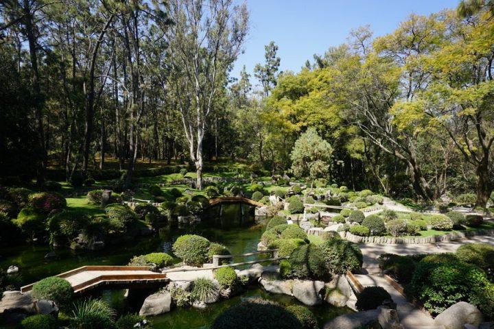 Guadalajara Japanese Garden