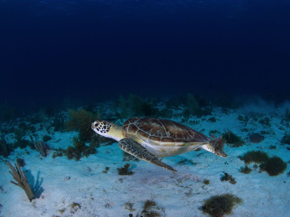 scuba diving is one of the best things to do in isla mujeres