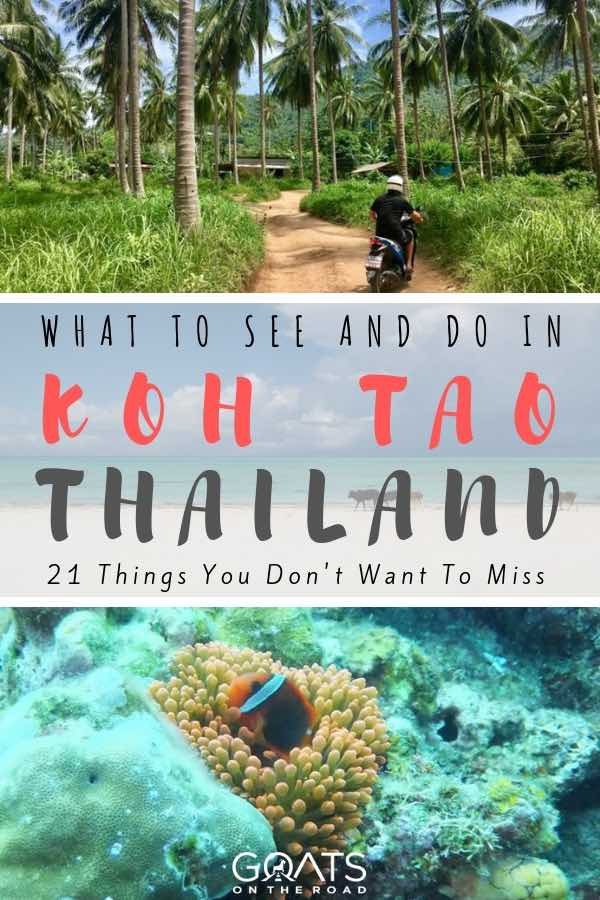 riding a scooter and diving in Koh Tao Thailand with text overlay
