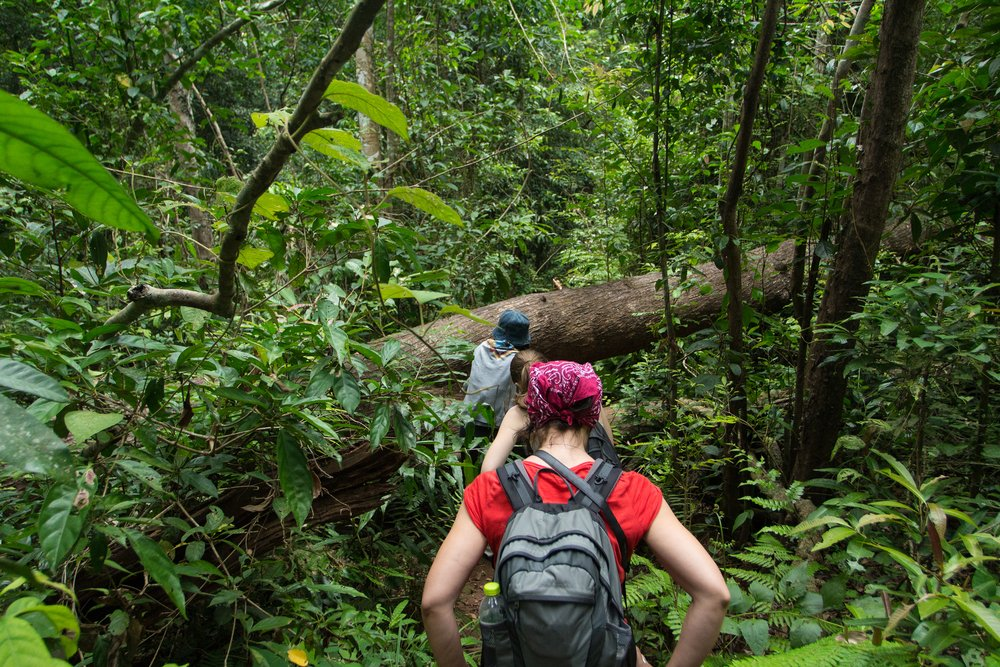 hiking through khao yai national park in thailand