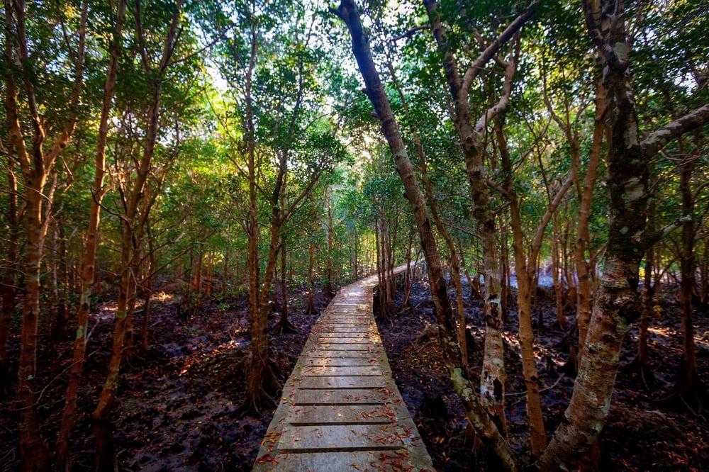 Thung Yee Pheng Mangrove Forest koh lanta