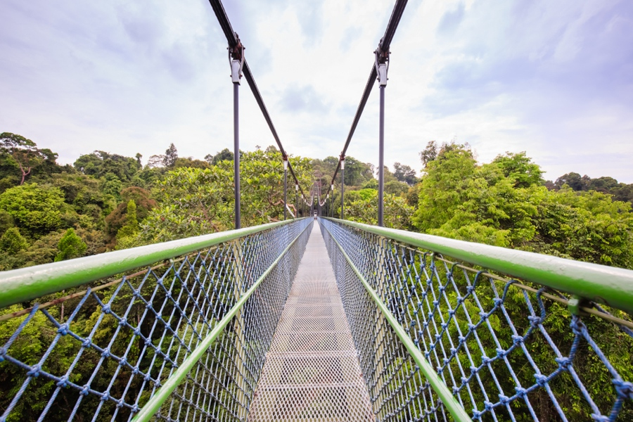 the treetop walk is one of the top things to do in singapore