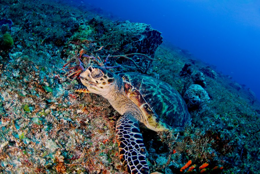 seeing turtles while scuba diving in playa del carmen