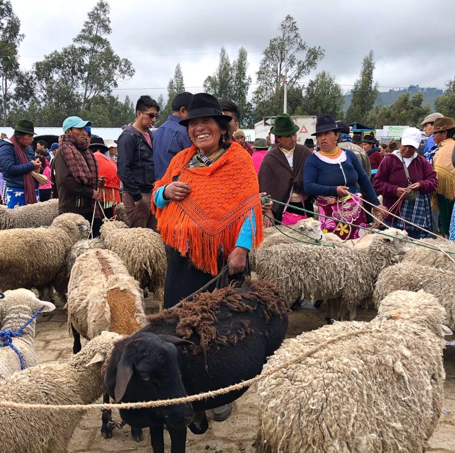sheep for sale saquisili market