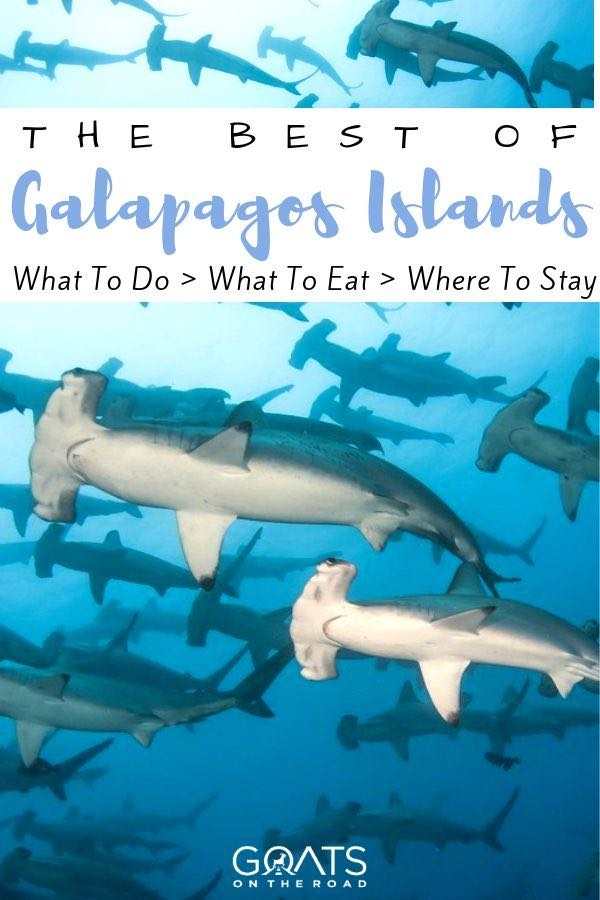 hammerhead sharks with text overlay the best of Galapagos islands