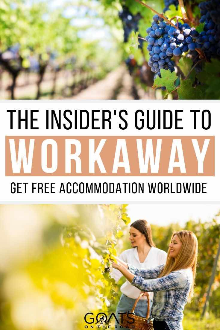 volunteering at a winery with text overlay the insiders guide to workaway