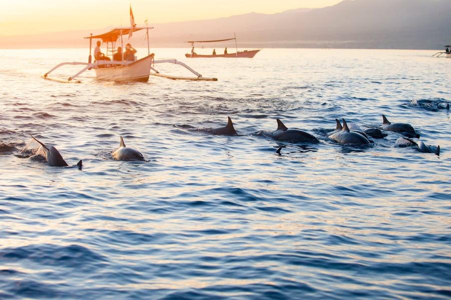 dolphin watching in lovina bali