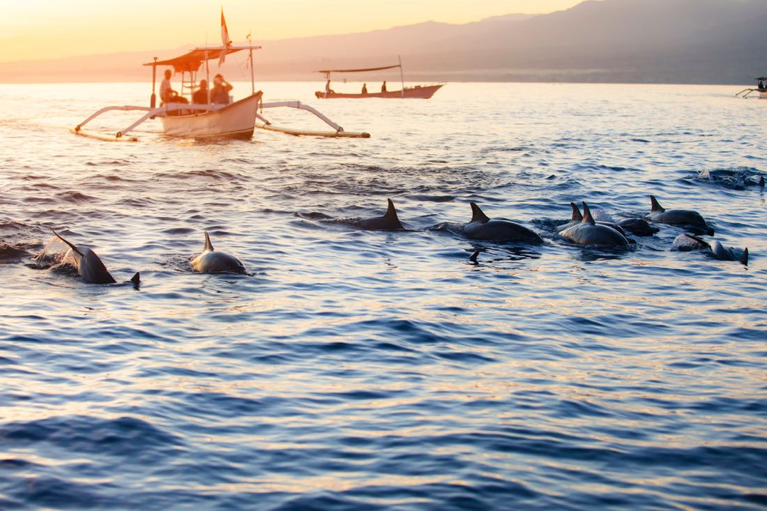 lovina beach bali dolphin tours