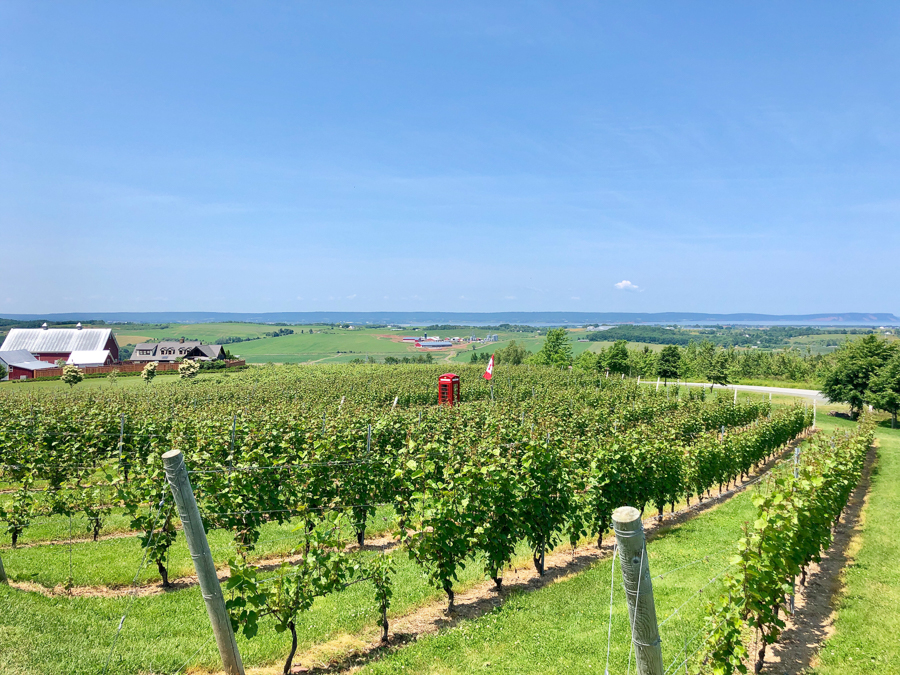 visiting vineyards things to do in nova scotia