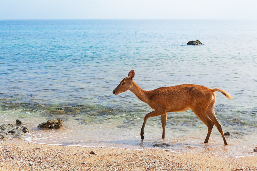 visit west bali national park to see deer