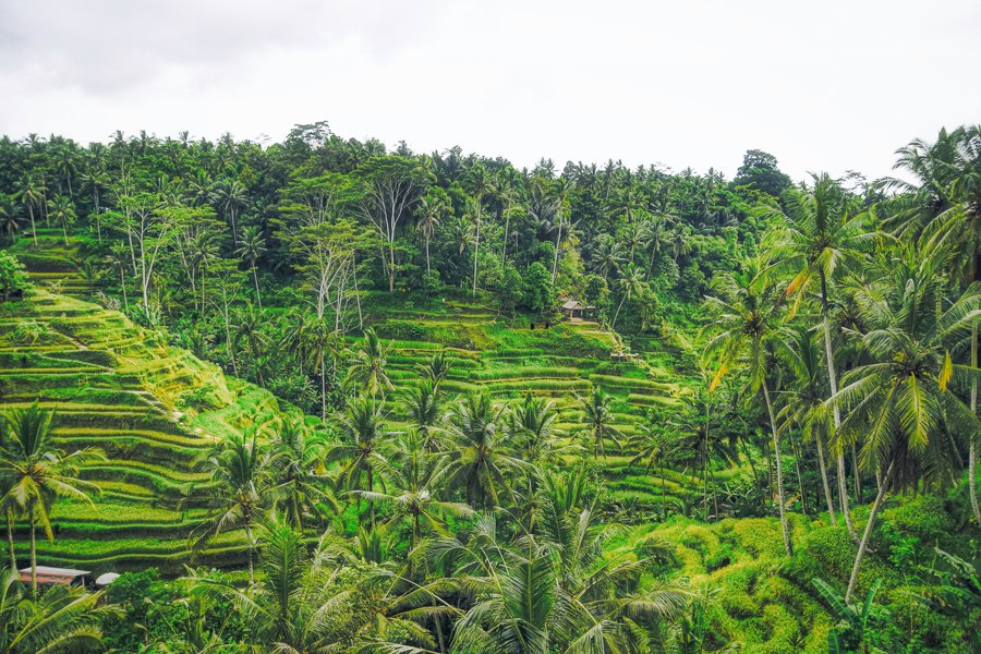 where to go in bali visit ubud