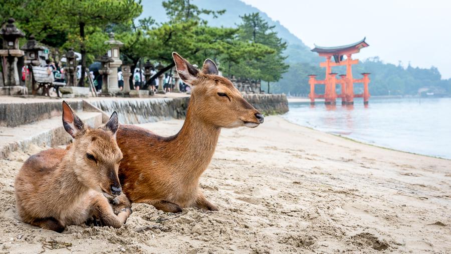 Miyajima island things to do in japan