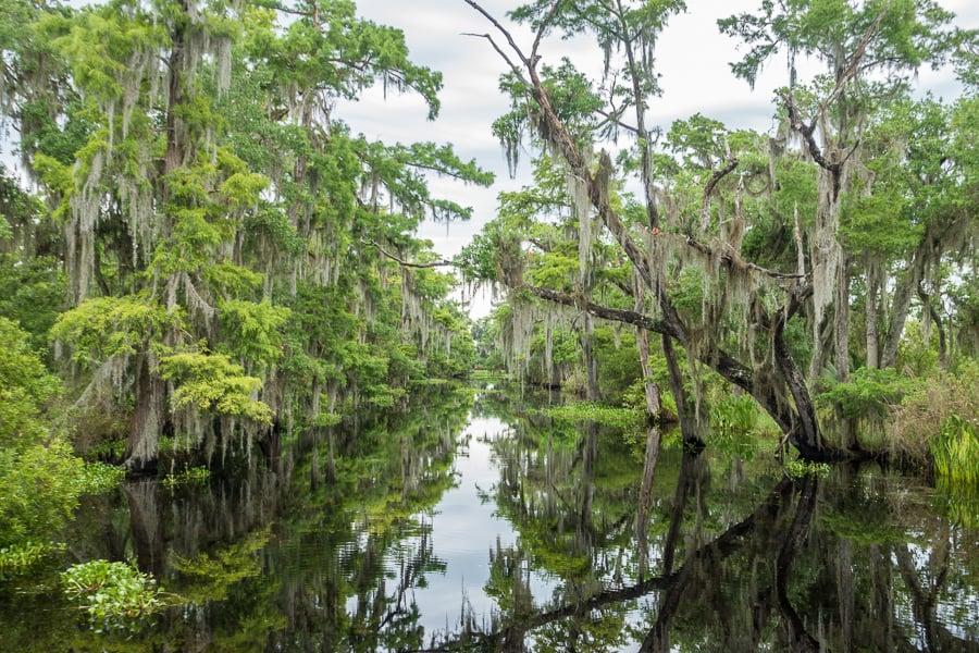 marais de la Nouvelle-Orléans