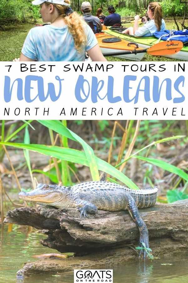 gator with text overlay 7 best swamp tours in new orleans