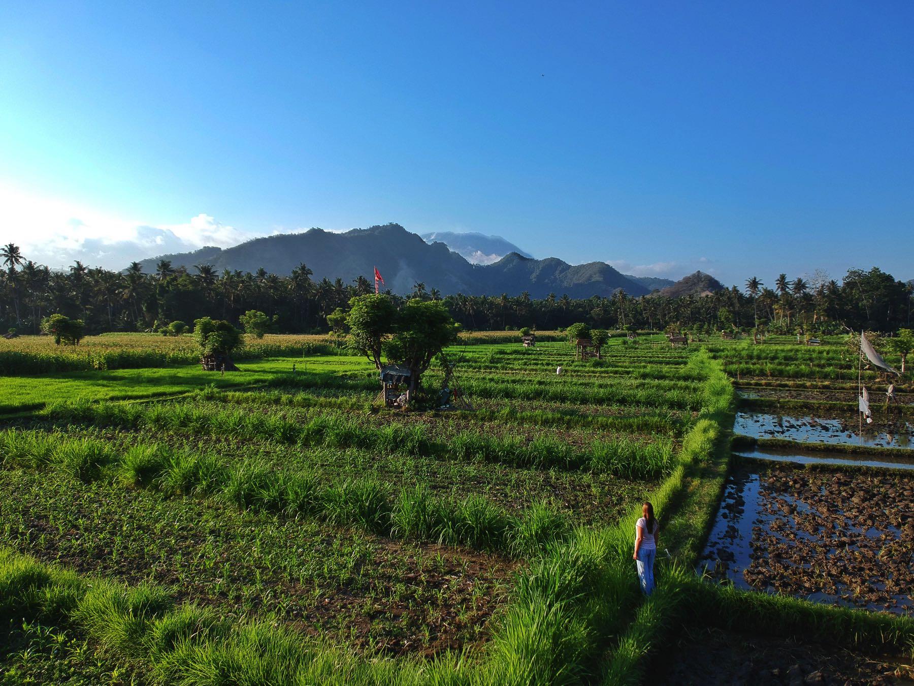 rice paddies candidasa drone