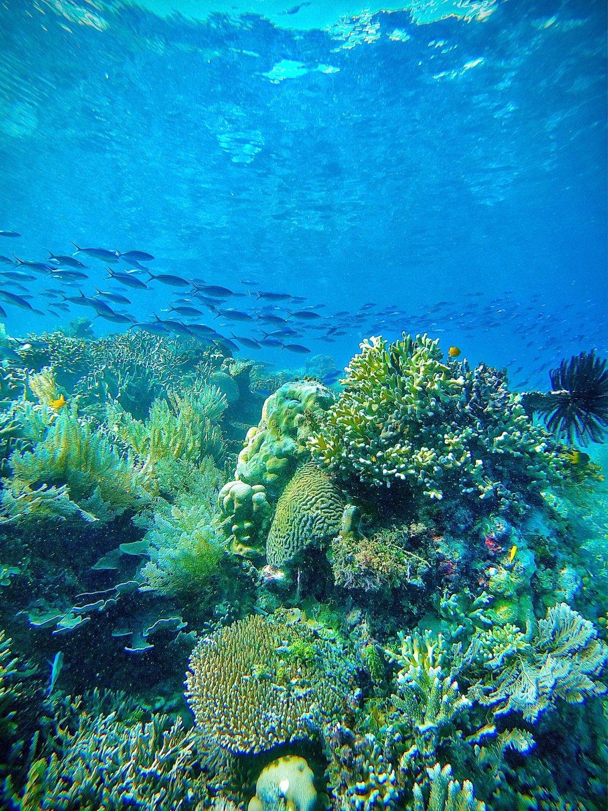 Coral Reefs Underwater Raja Ampat diving