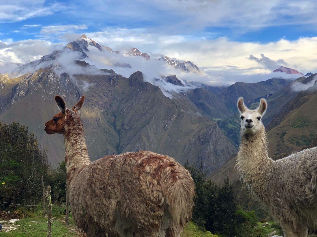 llamas inca trail trek