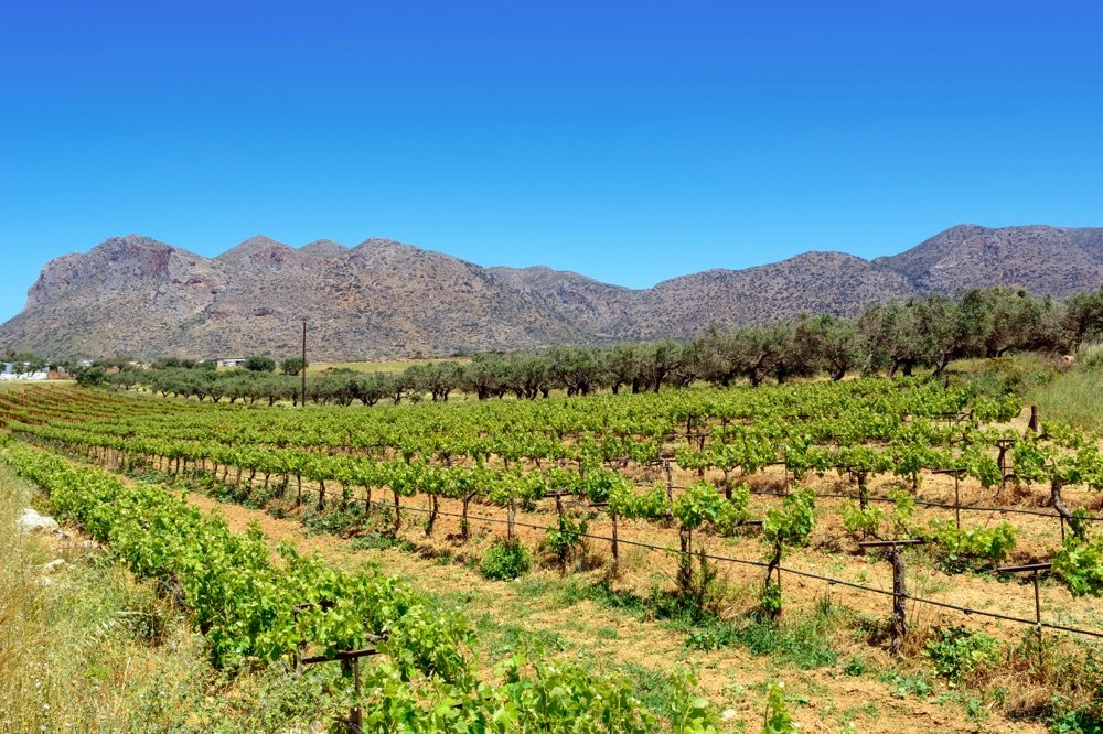things to do in crete visit winery