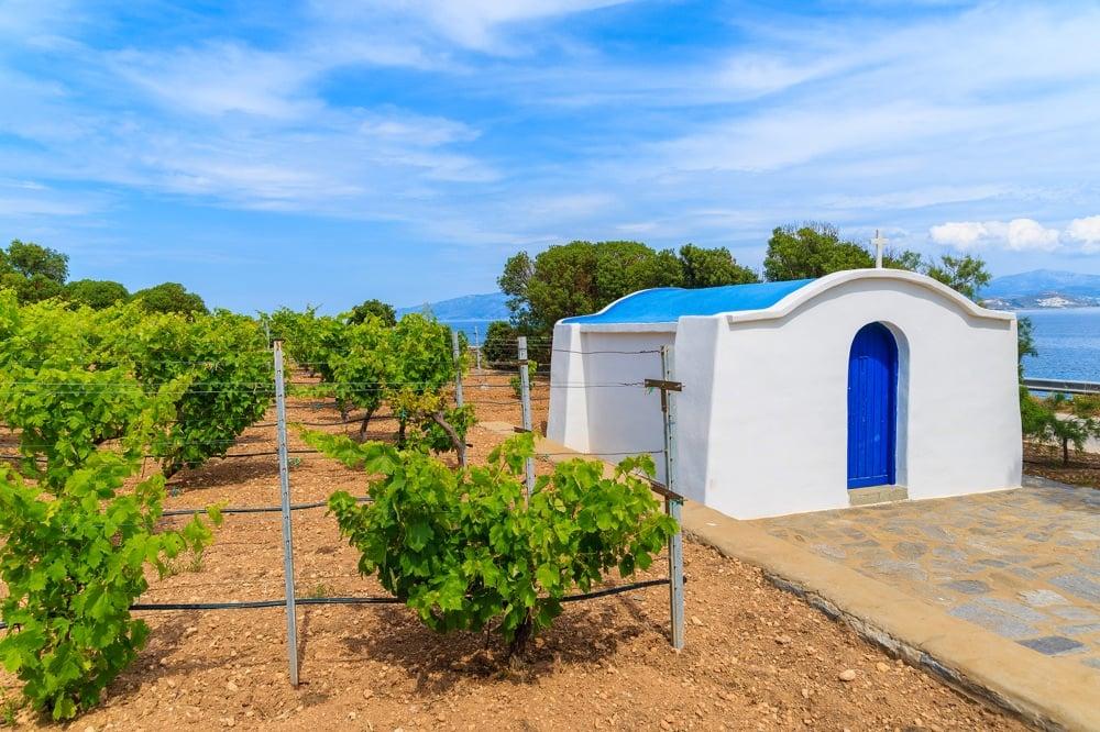 visit a vineyard things to do in santorini