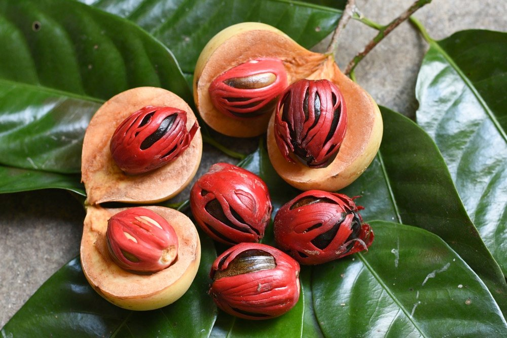 nutmeg in grenada