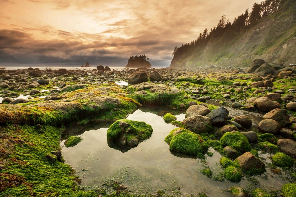 olympic national park washington seattle in two days