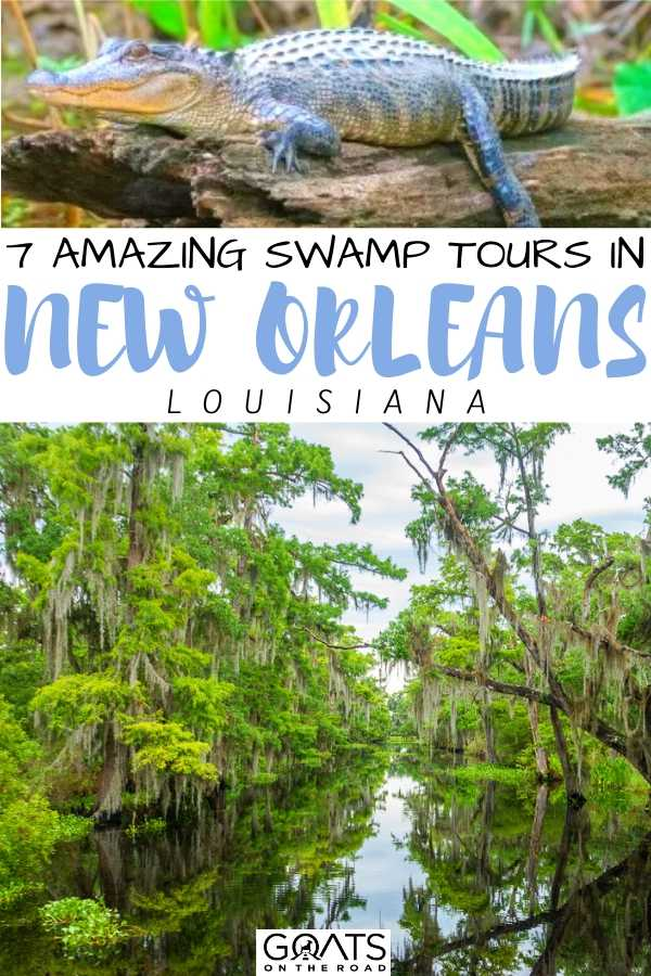 """7 Amazing Swamp Tours in New Orleans"