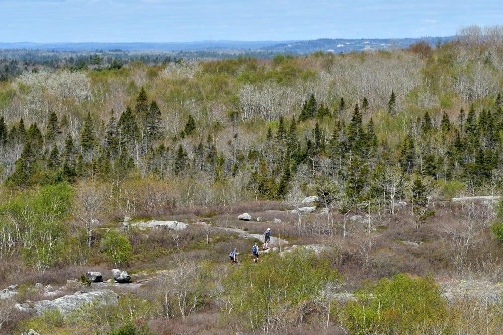 hiking in nova scotia at the bluffs wilderness