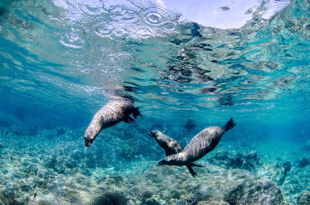 swiming with sea lions mexico la paz
