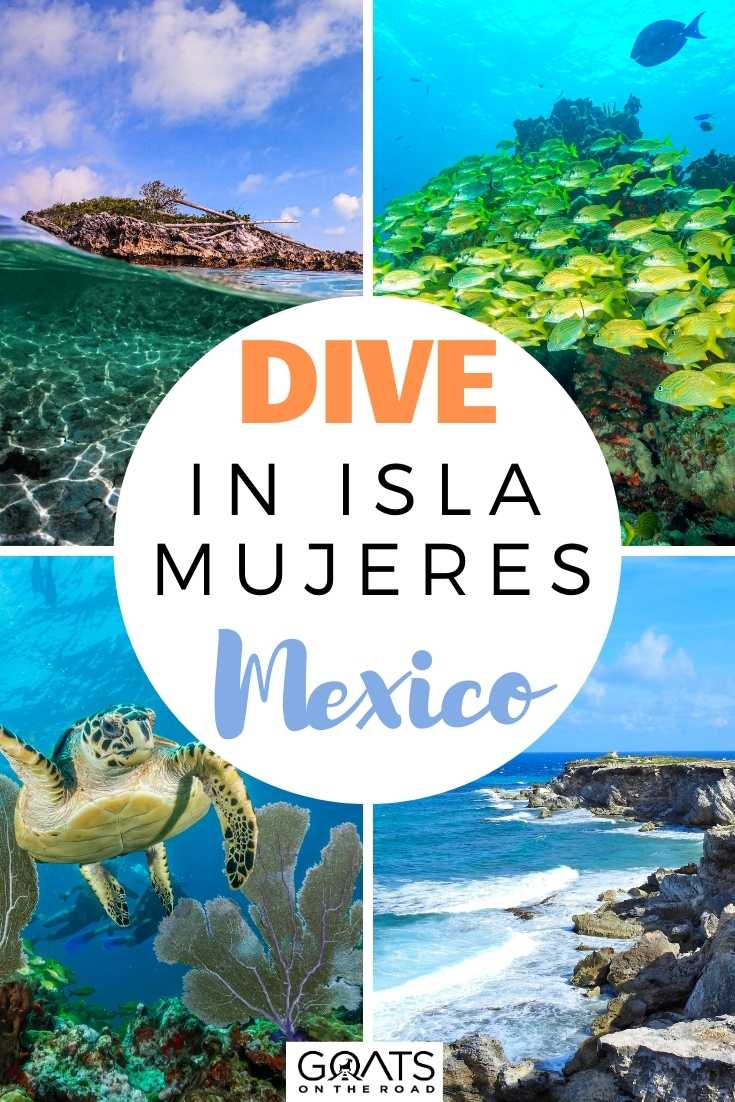 Dive in Isla Mujeres with Squalo Adventures