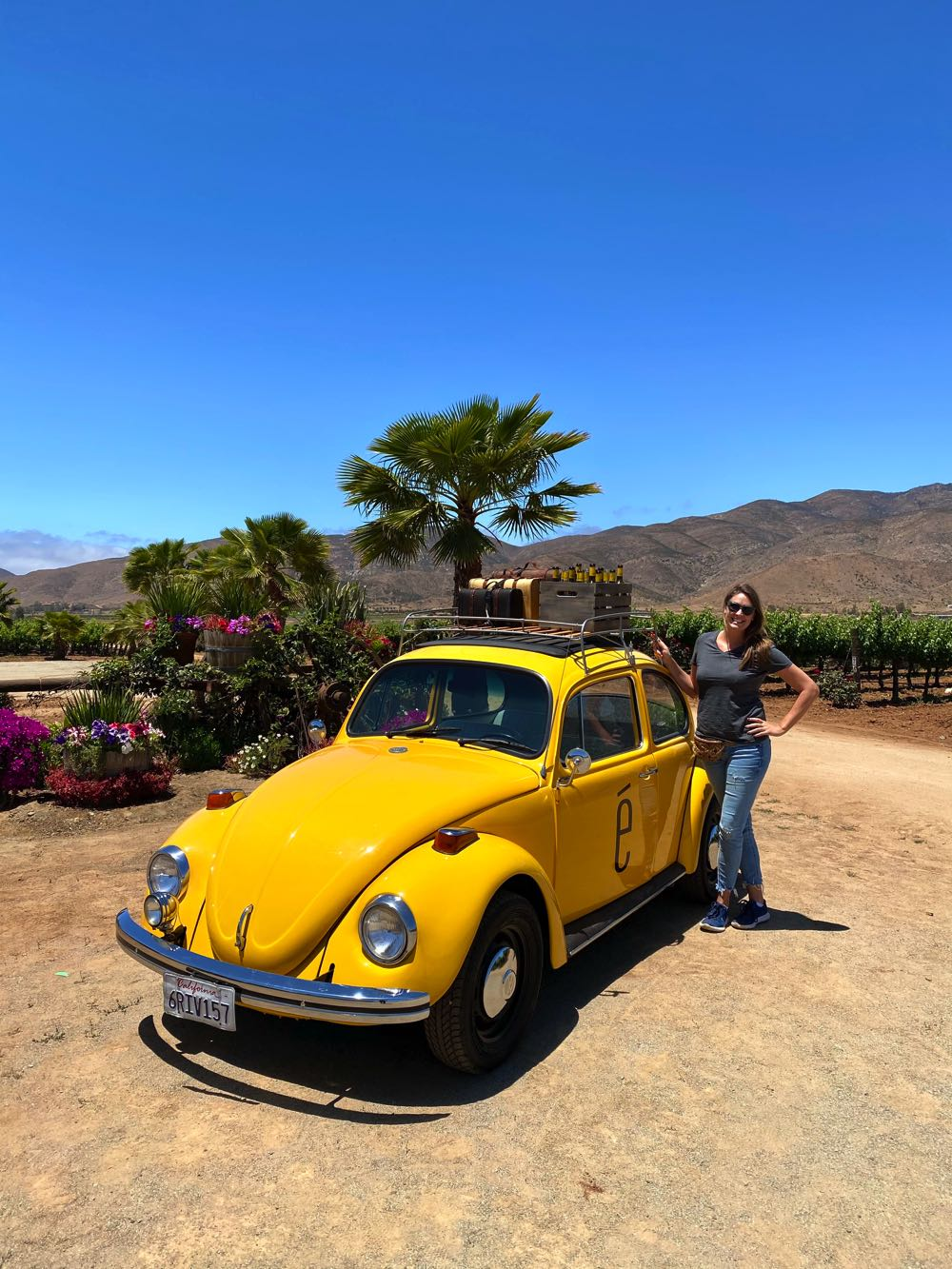 emeve winery valle de guadalupe