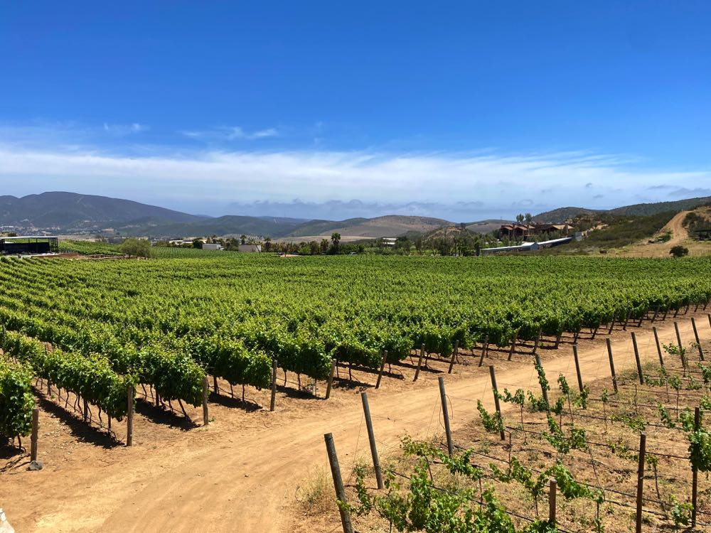 visiting the valle de guadalupe mexico